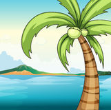 Coconut tree and ocean Stock Photo