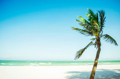 Coconut tree at ocean sandy beach. With sunny light Stock Photography