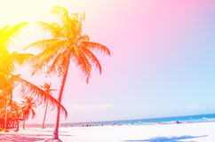 Coconut tree at ocean sandy beach. With vintage and retro light Stock Image