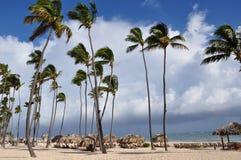 Coconut tree over beach huts Royalty Free Stock Photos
