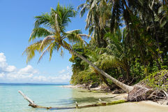 Coconut tree over the sea Stock Photography