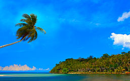 Coconut tree over the sea Stock Images