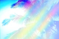 Coconut tree with pastel color abstract summer nature backgrou. Coconut tree with pastel color abstract summer nature wallpaper design background stock image