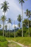 Coconut tree plantation Stock Image
