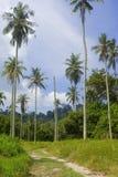 Coconut tree plantation stock image