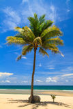 Coconut tree planted under big coconut tree Royalty Free Stock Image
