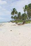 Coconut tree at Porto de Galinhas beach Stock Photo