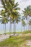 Coconut tree at Porto de Galinhas beach Royalty Free Stock Photos