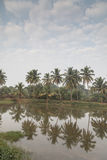 Coconut tree reflection in River Sal at Talaulim. Coconut tree reflection at sunrise , River Sal Goa India Stock Photography