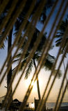 Coconut tree with resort view Royalty Free Stock Images