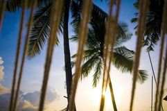 Coconut tree with resort view Royalty Free Stock Image