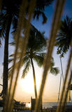 Coconut tree with resort view Stock Images