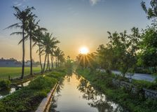 Coconut tree at the rice fields. Riverview, morningview, refflection Stock Photos