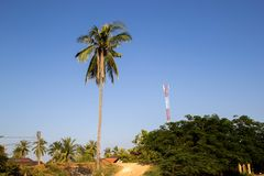 Coconut tree in riverside royalty free stock photos