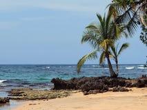 Coconut tree and sea Stock Image