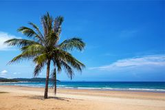 Coconut tree and sea. A coconut tree is growing on the sea beach royalty free stock photos