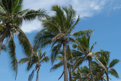 Coconut tree ,Sea in Rayong, Thailand . Royalty Free Stock Photography