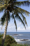 Coconut Tree Sea Scape stock photos
