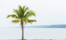 Coconut tree and sea Stock Photos