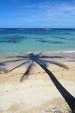 Coconut tree shade on a sandy beach Stock Image