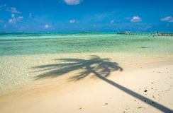 Coconut tree shadow on a beach in Moorea Royalty Free Stock Photography
