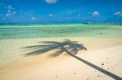 Coconut tree shadow on a beach in Moorea. Tahiti royalty free stock photography