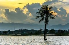 Coconut tree silent. Beautifull coconus tress at lake in cikoneng Royalty Free Stock Photos