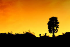 Coconut tree silhouette Stock Images