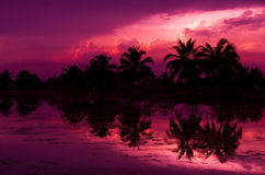 Coconut tree silhouette. At sunset reflected on water Royalty Free Stock Photos