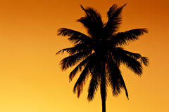 Coconut tree silhouette Stock Photo