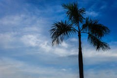 Coconut tree silhouette. And blue sky background Royalty Free Stock Image