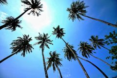 Coconut tree silhouette in the blue sky on the sea,Selection focus in image royalty free stock photography