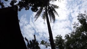 Coconut tree silhouette. Silhouette of culture house of indonesia with coconut tree stock video footage