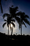 Coconut tree silhouette. With sunrise background Royalty Free Stock Images