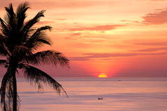 Coconut tree silhouette at sunset Royalty Free Stock Images