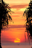Coconut tree silhouette at sunset Stock Photo