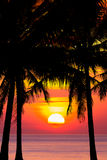 Coconut tree silhouette at sunset Stock Image