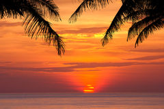 Coconut tree silhouette at sunset Royalty Free Stock Photography