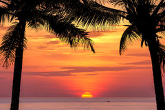Coconut tree silhouette at sunset Stock Images