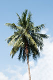 Coconut tree on sky Stock Image