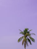 Coconut Tree and sky. Coconut tree and blue sky background Royalty Free Stock Photo