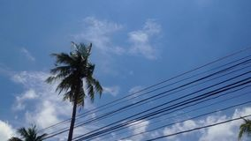 Coconut tree with sky and cloud timelapse stock video footage