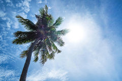 Coconut tree on the sky with sun lens flare effects Royalty Free Stock Image