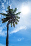 Coconut tree on the sky with sun lens flare effects Stock Image