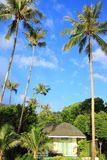 Coconut tree and small hut on blue sky  background Royalty Free Stock Photos