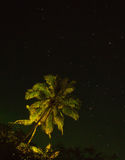 Coconut tree. With starry sky Stock Image