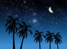Coconut tree and stars Royalty Free Stock Photography
