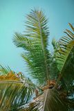 Coconut tree in the summer stock image