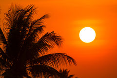 Coconut tree and sun Stock Photography