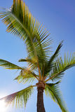Coconut tree with sun through leaves Stock Photos